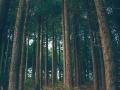 Dark Forest-80