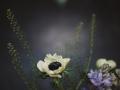 enchanted_brides_photography-34
